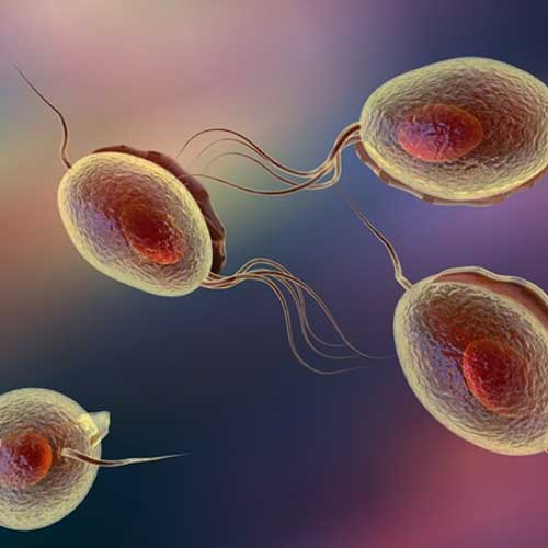 Trichomoniasis - Treatment in Chennai