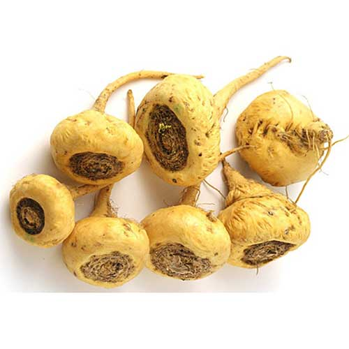 lepidium-meyenii-maca-root-erection-problems