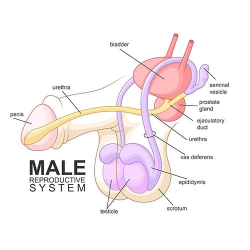 What causes retrograde ejaculation?
