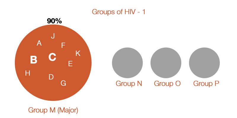 HIV Types and Strains and RT-PCR Test