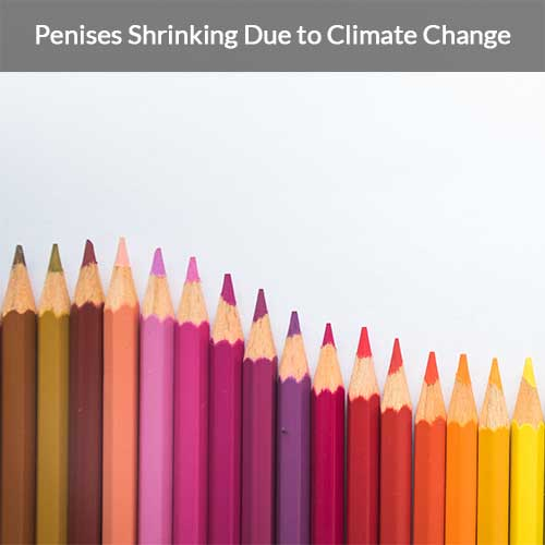 How climate change is affecting the size of men's penises?